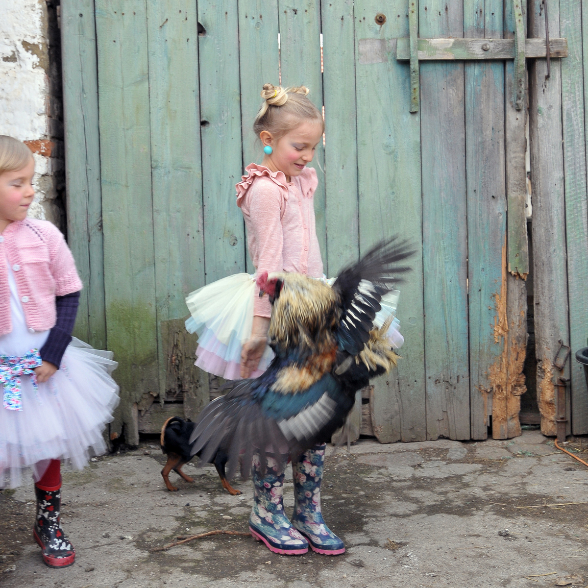 pentle dress and rooster